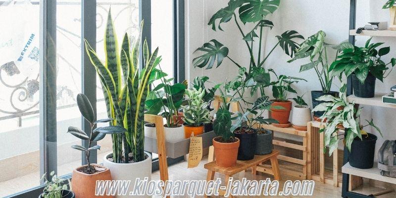 Cara Membuat Rumah  yang Bernuansa Alami - menempatkan tanaman hias indoor